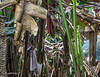 Mangrove swamp chaos.
