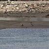 Birds on the beach.