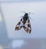 Interesting moth.