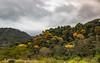 Hillside ouside Rafiki Lodge.