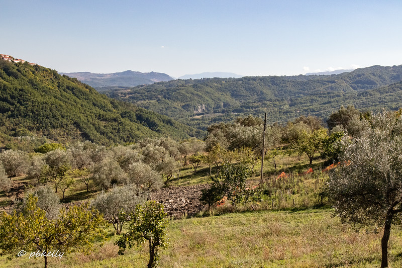 View over the hills through the olive trees and some fruit trees.