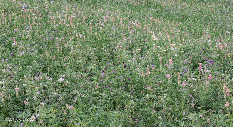 Wildflowers planted for bees at an Agriturismo.