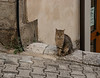Civitanova del Sannio,  I don't take cat pictures on purpose, but there were so many roaming around the old streets they appear in many shots.  This one posed for its own.