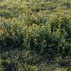 Wildflowers on the Tratturi.