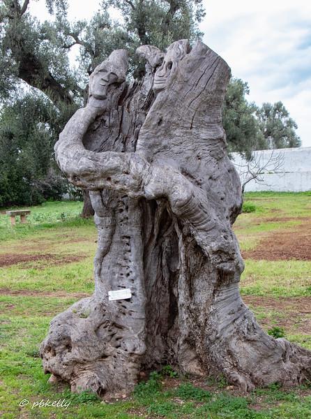 Olive trunk sculpture.