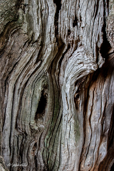 Close up of a part of a trunk.