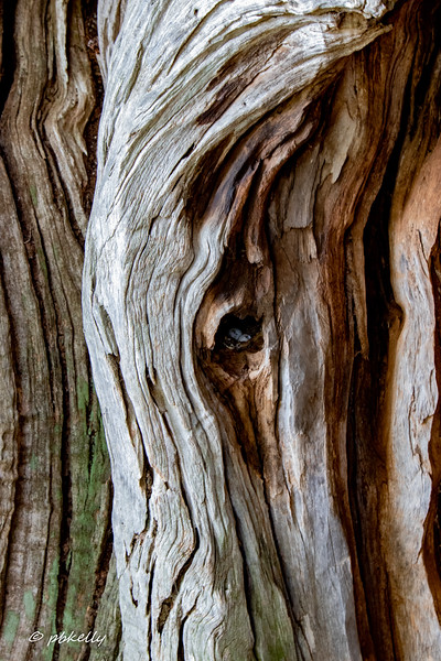 I could probably have spent days doing olive wood abstracts.  This tree has some eggs (don't know whose)  in the hole.