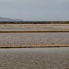 Salt flats with gulls.