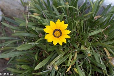 092021.  Couldn't resist a few flower shots.