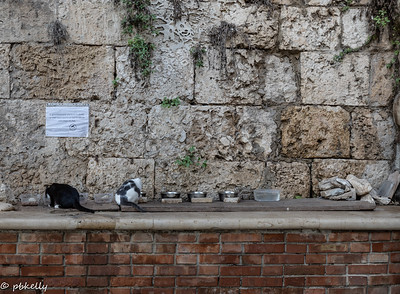 091721.  Many cats on Ortegia.  This is a feeding station protected by CCTV.