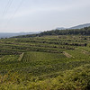 View of Villagrande Winery o the slopes of Mt Aetna.