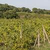 Vines ar Villagrande