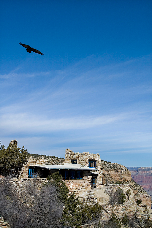 Raven cirling the studio on the rim of the Grand Canyon