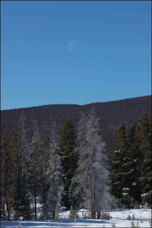 Moon over trees in Colorado Rockies.  Near West entrance of Rocky Mountain National Park.