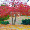 Roger Williams Park<br /> Providence, RI