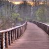 The boardwalk at Beaver Marsh