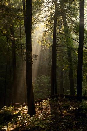 Walking down to Cedar Falls<br /> Hocking Hills State Park