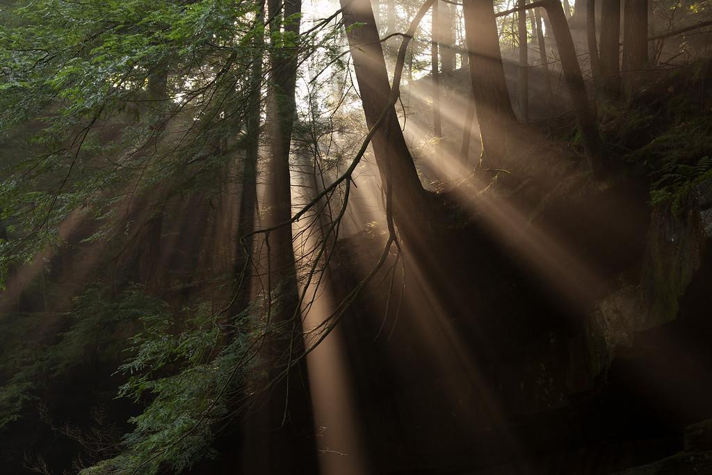Light rays beam down through the dense humid air<br /> Hocking Hills State Park; slideshow2015