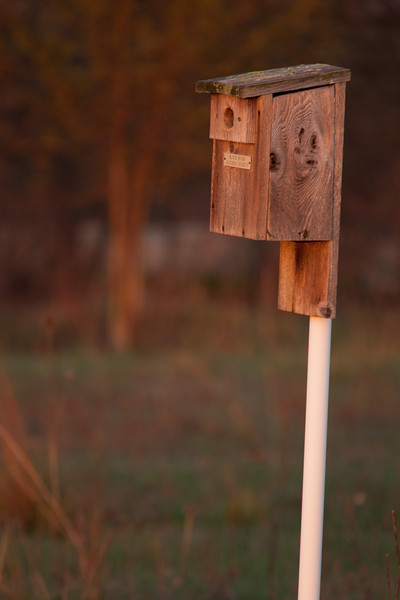 The early morning sun paints this birdhouse with warm light.