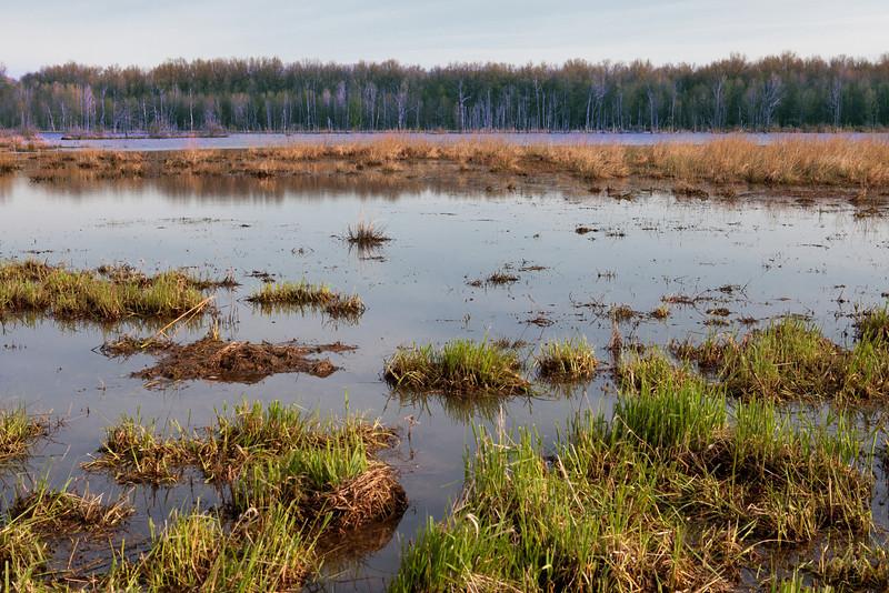 Sandy Ridge Marsh in the early morning.