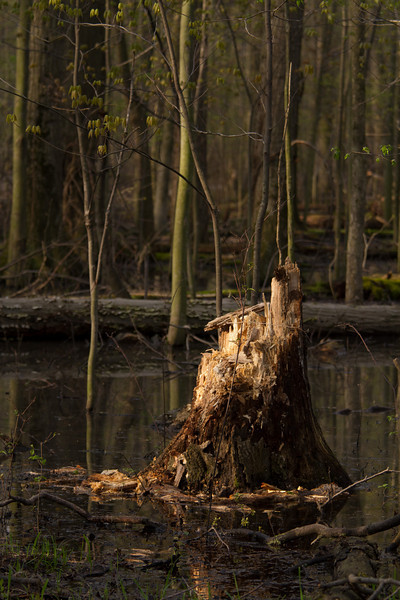 Man, there must be some big beavers in this area... lol