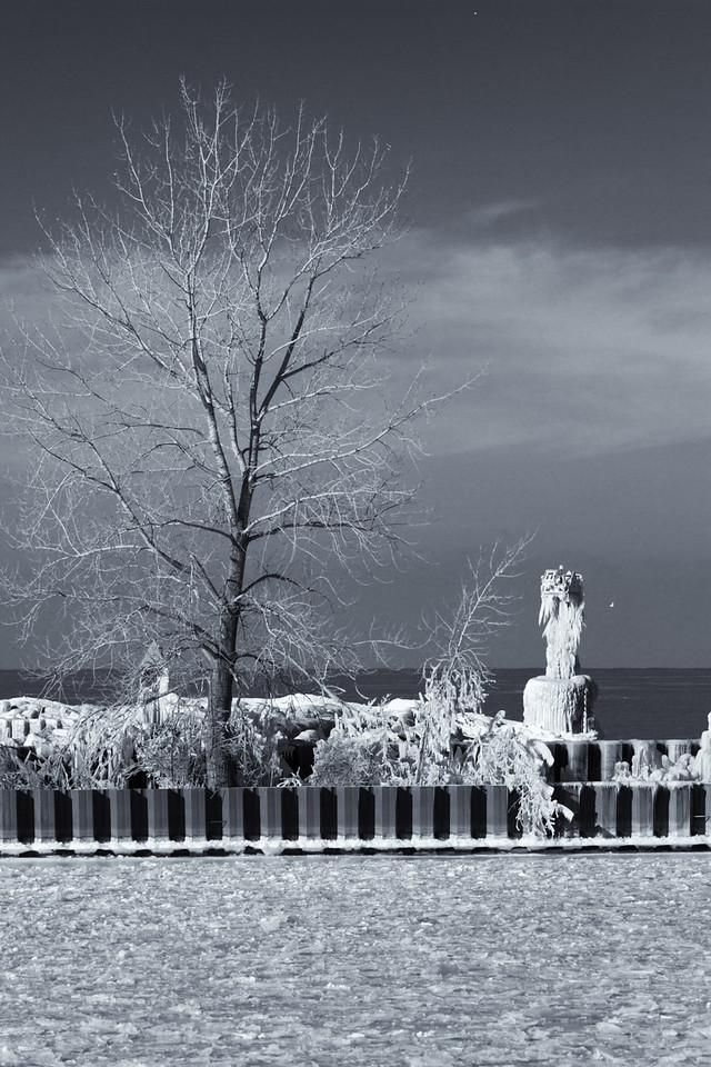 I love the way the tree limbs radiate with this infrared photo.