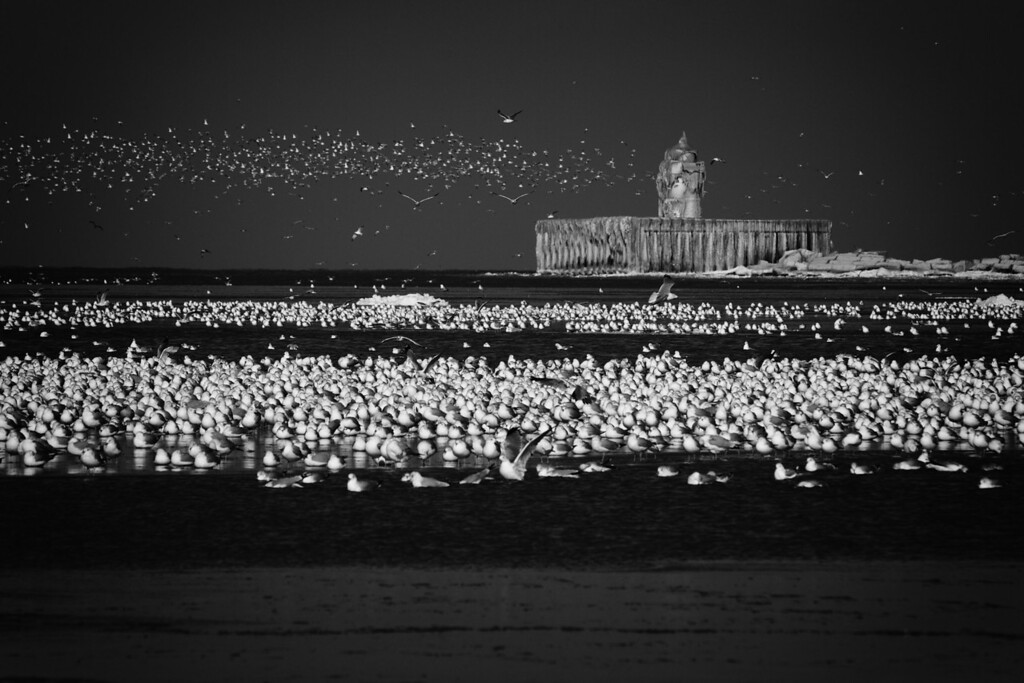 The seagulls look like a beam of light radiating from the breakwall marker.