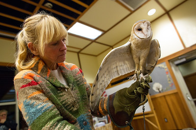 Barn Owl with handler