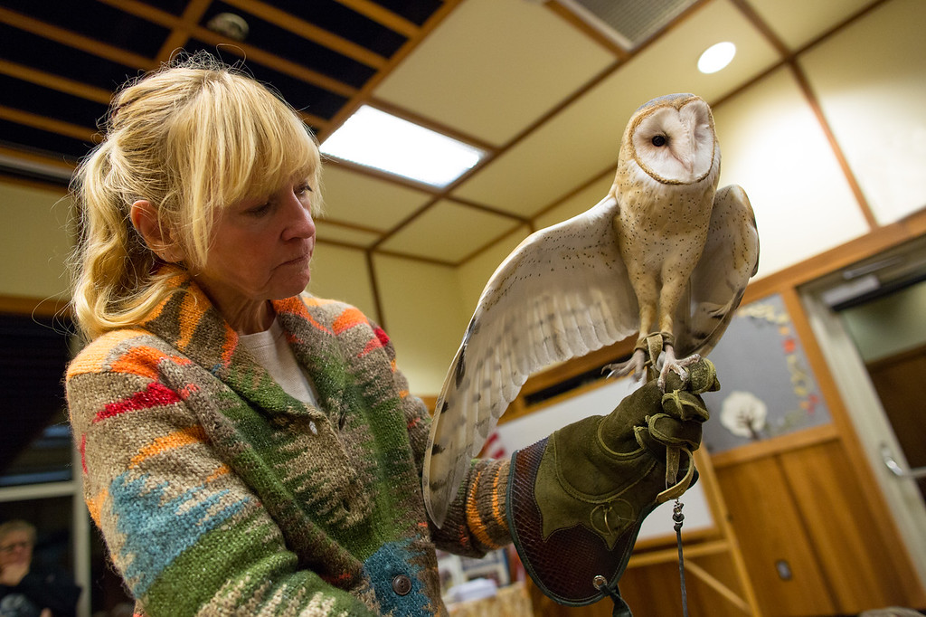 Barn Owl with handler