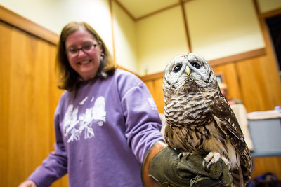 Barred Owl with handler