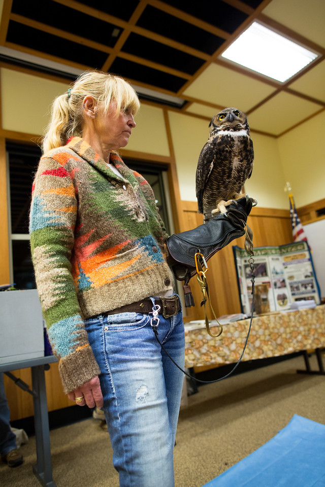 Great Horned Owl with handler