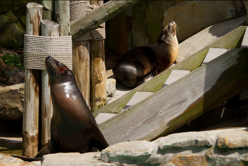 Even Sea Lions like to enjoy some afternoon sun.<br /> Lens: Canon 70-200 F4L IS with Canon 1.4x Mark II extender