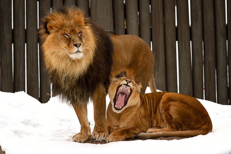 ....ROAR!   I'm the queen of this land!