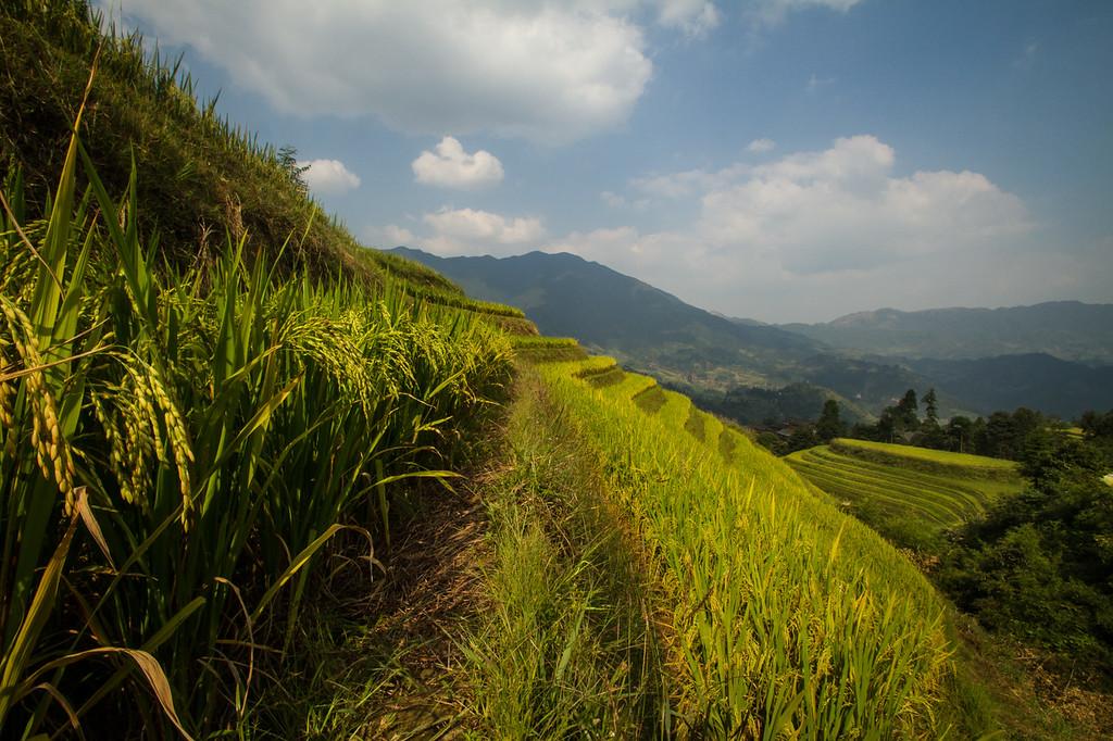 Longji Rice Terraces, Guanxi, China