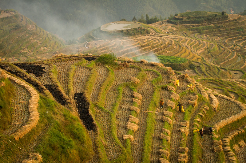 Lonji Rice Terraces, Guanxi, China