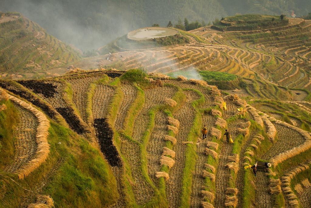 Lonji Rice Terraces, Guanxi, China