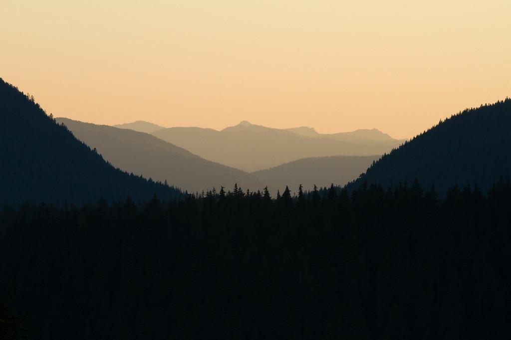 Sea of Trees, Oregon, USA