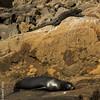 Sleep for Sea Lion, but Marine Iguana (above) is awake