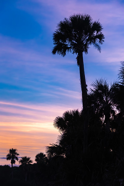 Sunset Palms.
