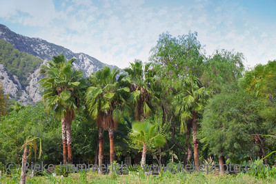 Garden with Palm Trees in front of Taurus Mountains - Cirali, Turkey, Asia