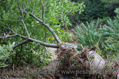 Fallen Tree with Mattress after Storm and Flood Disaster - Olympos, Turkey, Asia