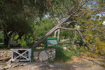 Fallen Tree in Garden after Storm - Cirali, Turkey, Asia