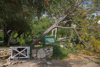 Fallen Tree in Garden after Storm - Cirali, Turkey, Asia