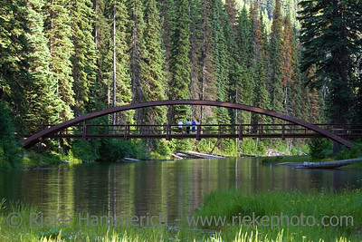an old bridge over a lake - in a forest