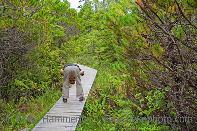 Man on Boardwalk in the Woods - Pacific Rim National Park, Vancouver Island, British Columbia, Canada