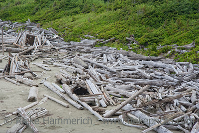 Driftwood on Long Beach - Pacific Rim National Park, Vancouver Island, British Columbia, Canada