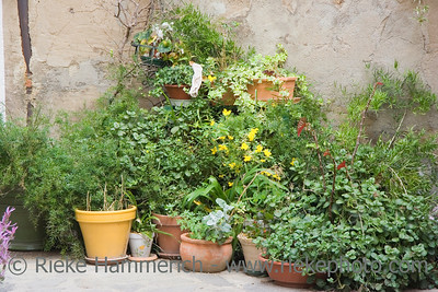 potted plants - with one lonely sock - ramatuelle, french riviera - adobe RGB