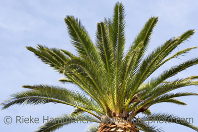 palm tree -  french riviera - adobe RGB