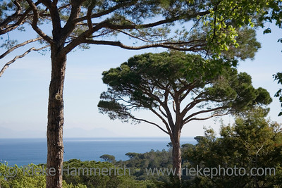 umbrella pines over the ocean - French Riviera - adobe RGB