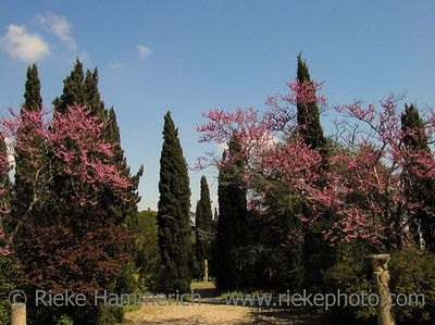 Mediterranean Landscape with bloomy almonds and cypresses